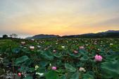 2014.08.29_大溪濕地荷池晨彩:2014.08.29_大溪濕地-晨荷0010.jpg