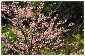 2013.02.06_大溪果園-尼康篇:2013.02.06_大溪果園-Nikon-0019.jpg