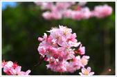 2013.02.06_大溪果園-尼康篇:2013.02.06_大溪果園-Nikon-0010.jpg