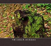 2013.03.23_滿月園森林浴:2013.03.23_滿月園森林浴-0012.jpg