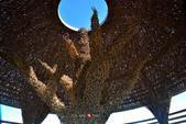 2014.08.22_環島Day-6-台東鳥巢:2014.08.22_環島Day6-台東-鳥巢0017.jpg