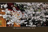 2013.03.16_悠遊阿里山-夜櫻車軌篇:2013.03.16_阿里山-夜櫻車軌篇0017.jpg