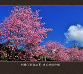 2013.02.14_嘉義頂石棹昭和櫻:2013.02.20_頂石棹昭和櫻-0002.jpg