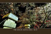 2013.03.16_悠遊阿里山-夜櫻車軌篇:2013.03.16_阿里山-夜櫻車軌篇0018.jpg