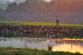 2014.09.03_濕地之晨:2014.09.03_大溪濕地之晨0012.jpg