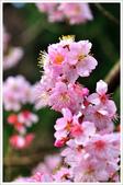 2013.02.06_大溪果園-尼康篇:2013.02.06_大溪果園-Nikon-0020.jpg