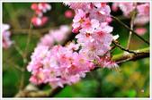 2013.02.06_大溪果園-尼康篇:2013.02.06_大溪果園-Nikon-0011.jpg