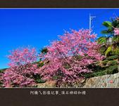 2013.02.14_嘉義頂石棹昭和櫻:2013.02.20_頂石棹昭和櫻-0003.jpg
