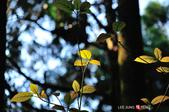 2014.04.05_溪頭遊記-風景篇:2014.04.05_溪頭遊記-風景篇0014.jpg