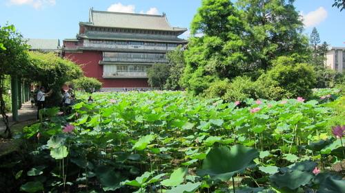 022.JPG - 植物園荷塘賞花 2016/07/05