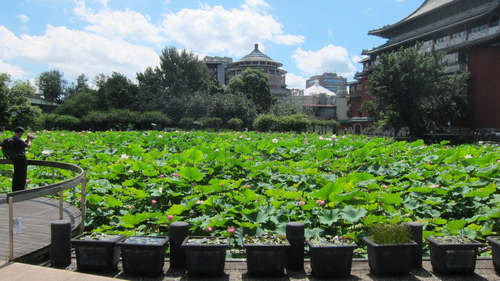 026.JPG - 植物園荷塘賞花 2016/07/05