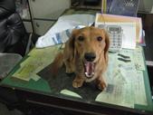 狗狗寫真:和姐姐去上班