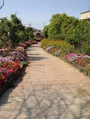 980315綠光花園(vs.媽媽妹妹):綠光花園 (1).JPG