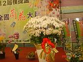 台中市   南屯 :flower (5).jpg