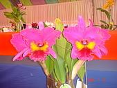 台中市   南屯 :flower (10).jpg