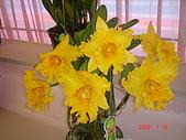 台中市   南屯 :flower (6).jpg