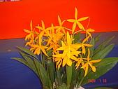 台中市   南屯 :flower (11).jpg