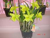 台中市   南屯 :flower (7).jpg