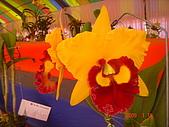 台中市   南屯 :flower (12).jpg