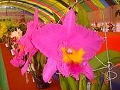 台中市   南屯 :flower (13).jpg