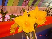 台中市   南屯 :flower (14).jpg