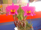 台中市   南屯 :flower (9).jpg