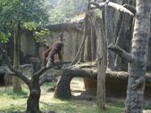 台北市 文山:動物園 (112).JPG