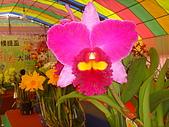 台中市   南屯 :flower (15).jpg