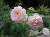 花卉:士林官邸 (5).jpg