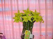 台中市   南屯 :flower (16).jpg