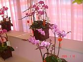 台中市   南屯 :flower (17).jpg