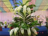 台中市   南屯 :flower.jpg