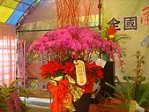 台中市   南屯 :flower (3).jpg