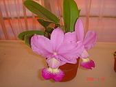 台中市   南屯 :flower (4).jpg
