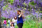 新北淡水紫藤咖啡園:h.JPG