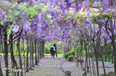 新北淡水紫藤咖啡園:j.JPG