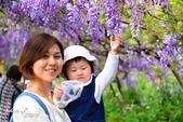 新北淡水紫藤咖啡園:g.JPG