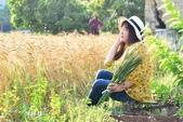 台中大雅小麥:5.JPG