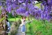 新北淡水紫藤咖啡園:i.JPG
