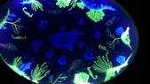 台北綠蒂飯店海底世界:P_20160705_175714.jpg