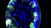 台北綠蒂飯店海底世界:P_20160705_175643.jpg