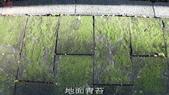 10-防滑止滑-青苔地面止滑-小黑蚊防治,花崗石止滑,浴室防滑,浴室止滑,磁磚防滑,磁磚止滑,止滑劑:14地面青苔 (9).jpg