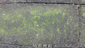 10-防滑止滑-青苔地面止滑-小黑蚊防治,花崗石止滑,浴室防滑,浴室止滑,磁磚防滑,磁磚止滑,止滑劑:11地面青苔 (6).jpg