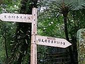 2008.05.23土城桐花公園:SANY0012.JPG