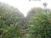 2008.09.25三角崙山:SANY0084.JPG