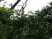 2008.05.23土城桐花公園:SANY0018.JPG