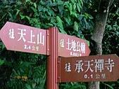 2008.05.23土城桐花公園:SANY0021.JPG