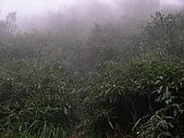 2008.09.25三角崙山:SANY0090.JPG