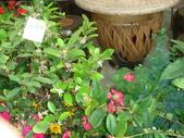 YR08 花卉展:1589792840.jpg