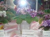 YR08 花卉展:1589792841.jpg